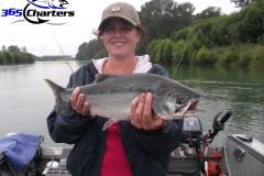 Pink-Salmon009