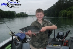 Pink-Salmon010