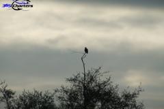 Eagle1c