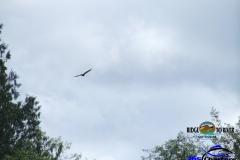 Skagit-Eagle-1a
