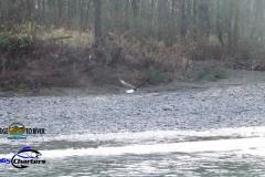 Skagit-Eagle-River-Flyby1aa