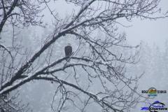 Skagit-River-Winter-Steelhead-and-Eagleaa