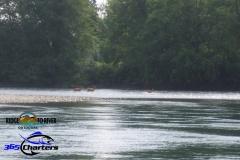 Skykomish-Deer-Crossing